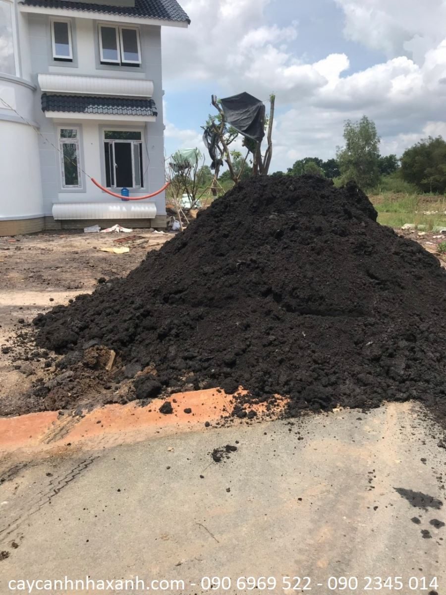 Đất đen trồng cây