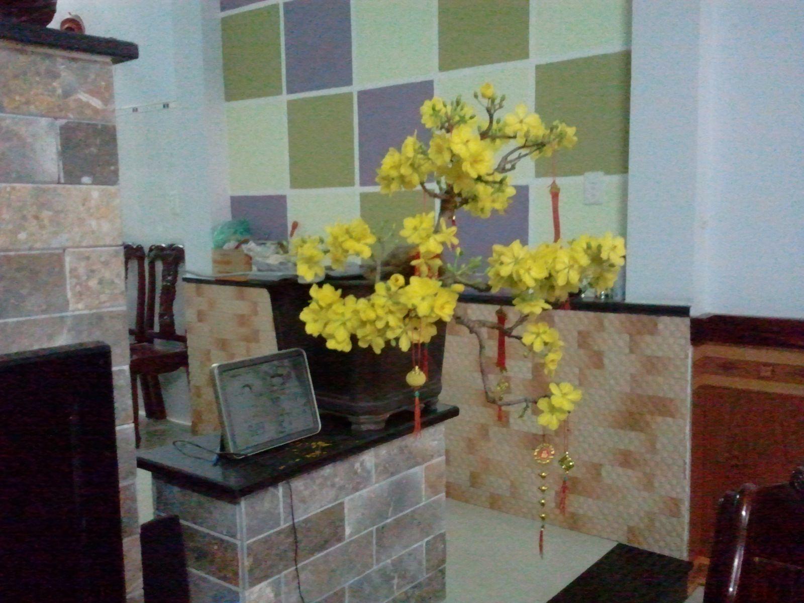 638 - Mai Bonsai nhỏ mùng 1 Tết