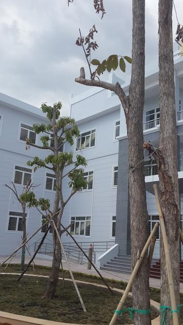 Trồng cây Lộc vừng cho Bộ CA
