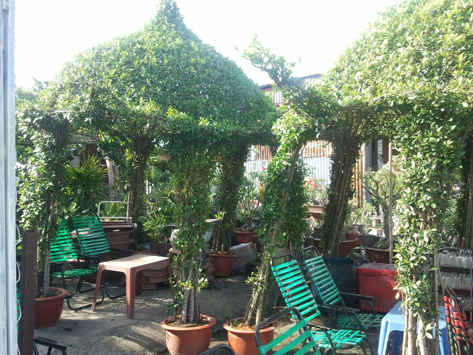 262 -Nhà chòi lục giác cây xanh