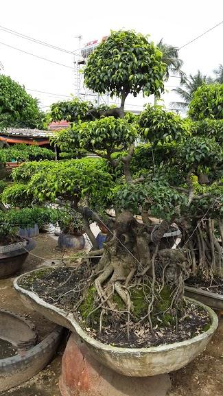 513 - Sanh dáng bay