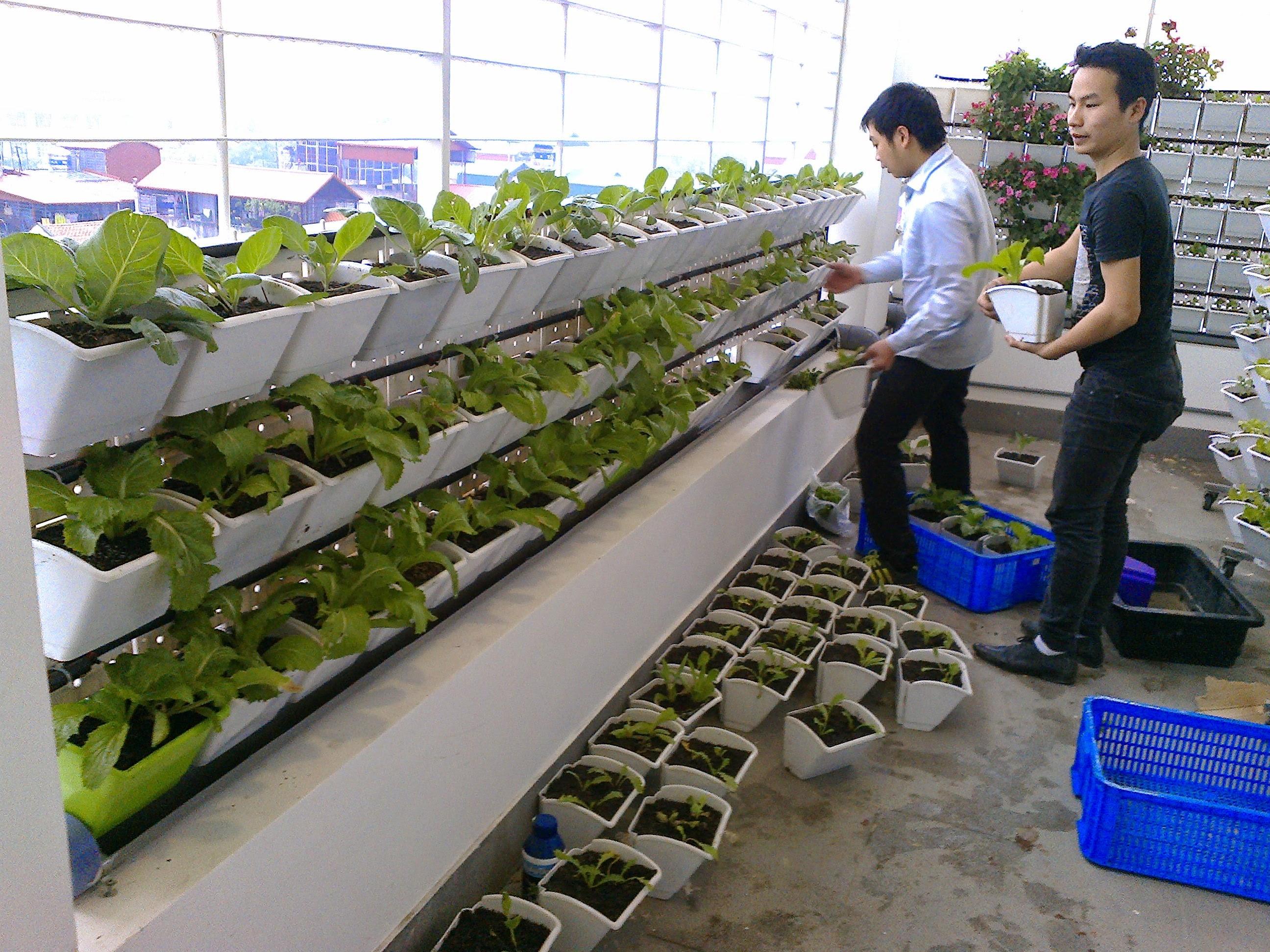 Thi công trồng rau trên tường