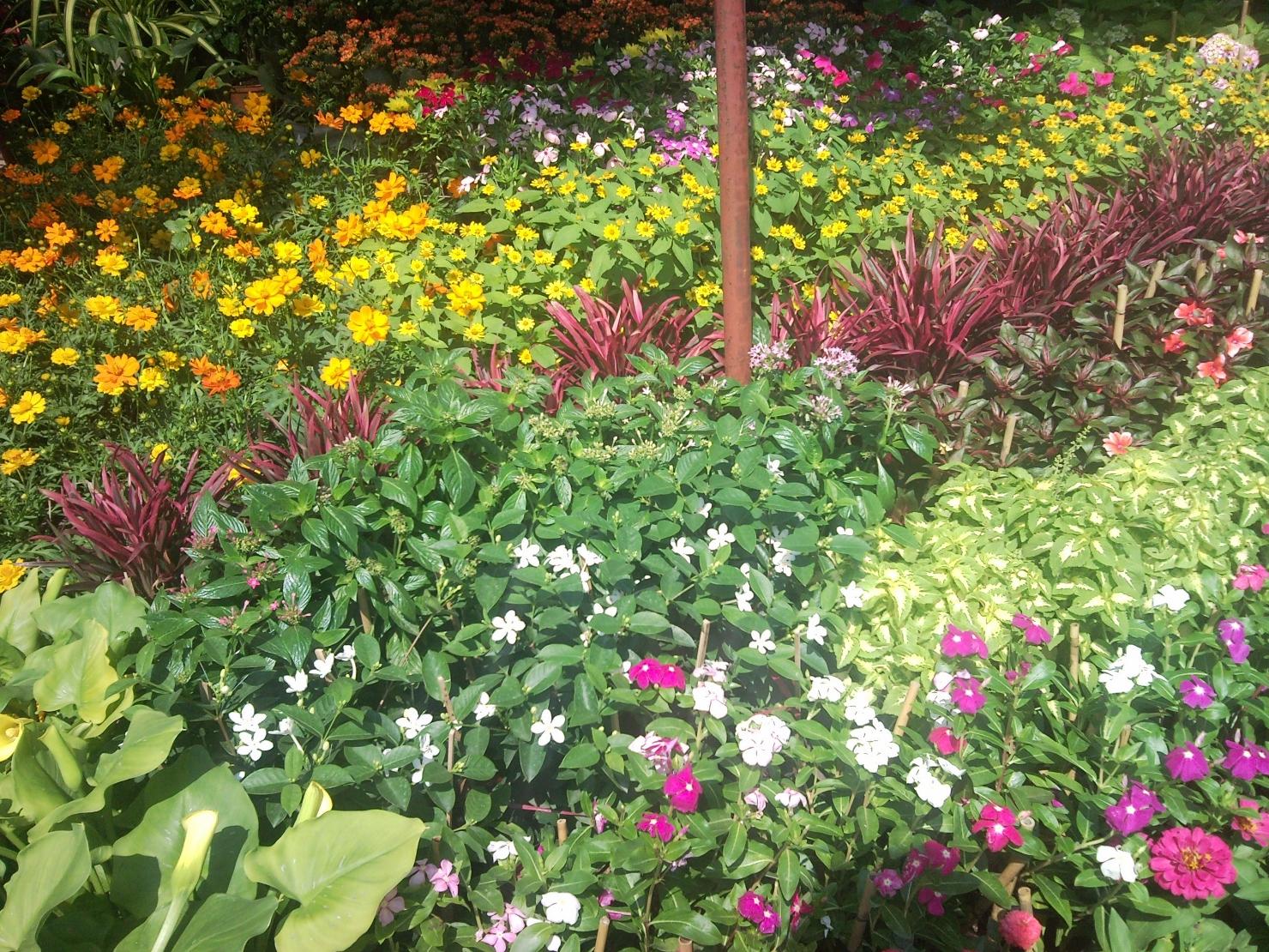 Vườn ươm cây có hoa