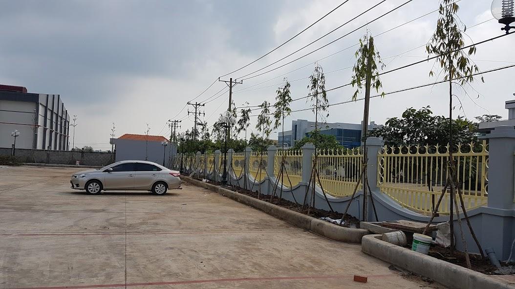 Trồng cây Hoàng nam tại  Cty Việt Dũng SG